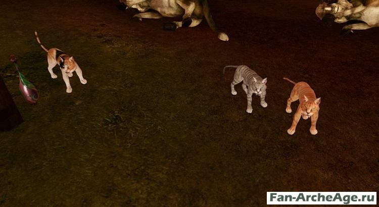 Боевой кот archeage