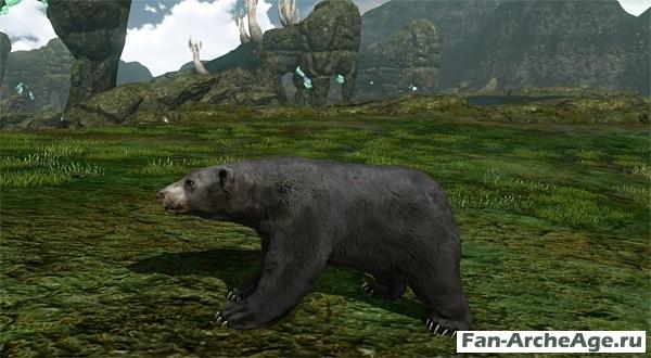 Ездовой черный медведь archeage